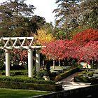 Autumn at Christchurch Gardens New Zealand by Sandra  Sengstock-Miller