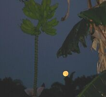PEOPLE GO BANANAS ON A FULL MOON by netcybergirl