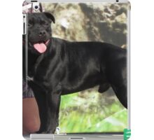 Beautiful Staffordshire Bull Terrier