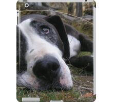 Awesome Staffordshire Bull Terrier