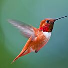 Rufis humming bird by Kirk Photography                      Kirk Friederich