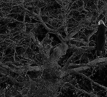 On the oak tree by George Sardis