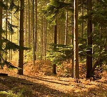 Lazy sunlit forest by SunGlint
