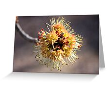 Maple Blossom Greeting Card