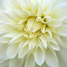 Dahlia by Catherine Davis