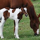Foal and Mare by Marjorie Wallace