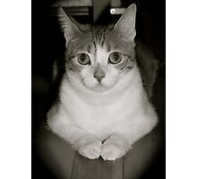 Pretty Kitty Photographic Print
