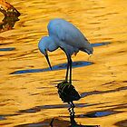snowy Egret at Twilight by kellimays