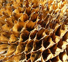 What is it?? Solved in 1 try, Gene Gregory,, its a sunflower !  by Linda Bianic