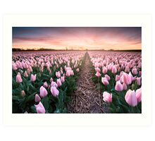 sweet pink tulips at sunset Art Print