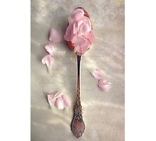 Carnation petals in a silver spoon Photographic Print