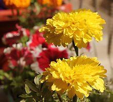 Yellow flower in a little garden by Shah-rah