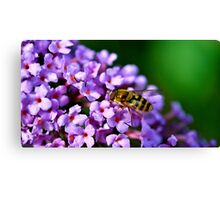 Purple Hoverfly Canvas Print