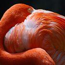 Flamingo's Best by saseoche