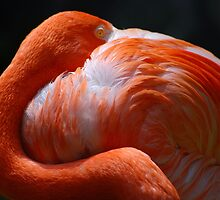 Flamingo's Best by saseoche