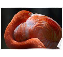 Flamingo's Best Poster