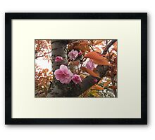 Cherry Tree, Pink Blossoms Framed Print