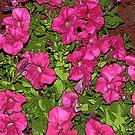 Pretty Pink Petals by MichelleR