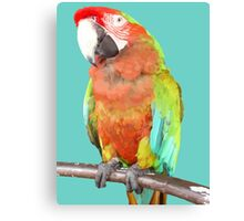 Vector Style Harlequin Macaw On A Perch Canvas Print