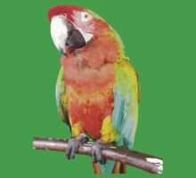 Vector Style Harlequin Macaw On A Perch Kids Clothes
