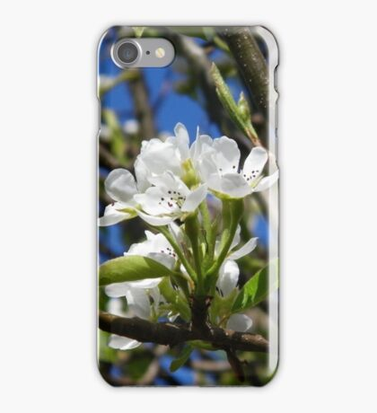 Cherry Tree, White Blossoms iPhone Case/Skin