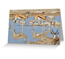 Springbok Antelope - Iconic Wildlife from the Desert Greeting Card