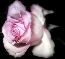 Pink Mist by naturelover