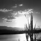 guinea grass in silhouette by valandsnake