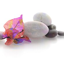Bougainvillaea and pebbles by Martine Affre Eisenlohr