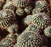 Cacti by PatiDesigns