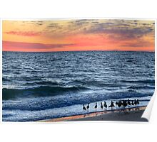 Willets and Sundown Surf Poster