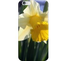 Two daffodils iPhone Case/Skin