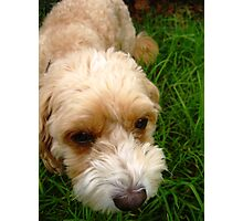 Grass Dog Photographic Print