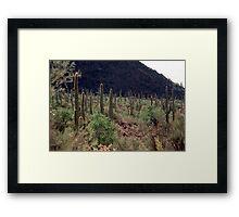 Desert near Tucson Framed Print