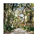 Though The Wooded Lane by Dana Yoachum