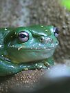Green Tree Frog by Leanne Allen