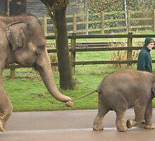 Elephant Train by Mark Thompson
