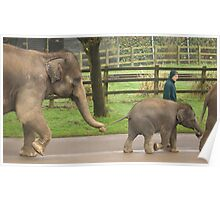 Elephant Train Poster