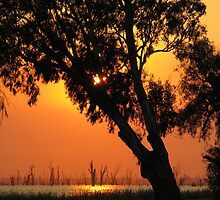 Trees silouetted against sunrise over Lake Mulwala by David Hunt