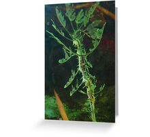 Sea Dragon (2) Greeting Card