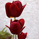 Red tulips by Agnes McGuinness