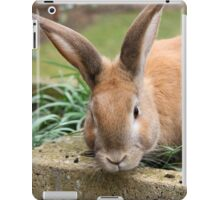 Domestic Rabbit I iPad Case/Skin