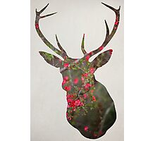 Deer With Quince Photographic Print