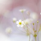 Spring Starburst by Jacky Parker