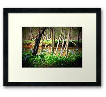 Bluebells on Bull Run Framed Print