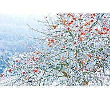 Frozen Apples Photographic Print
