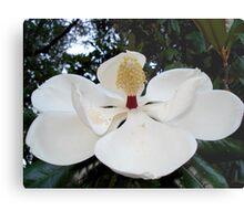 Magnolia Angel Metal Print