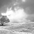 Solitary Tree by Carlos Restrepo