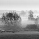 Water Meadow Mist by Christopher Cullen