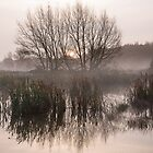 Water Meadow Mist by Christopher Cullen